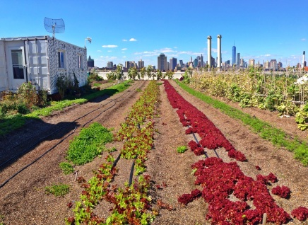 Brooklyn Grange; Rooftop Farming